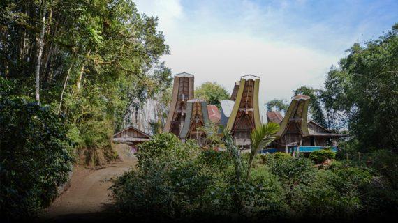 Bisnis Kopi Toraja, Ketahui Dahulu Jenis dan Cara Menjualnya